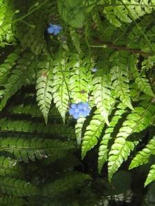 Flowers among ferns